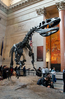 2014-03-05 American Museum of Natural History